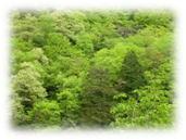 お香 焚き方-森林浴
